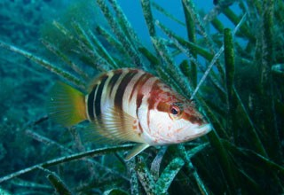 Seabed observation