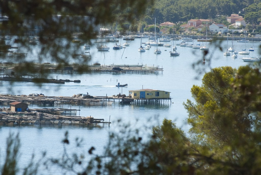 View on the mussel farms