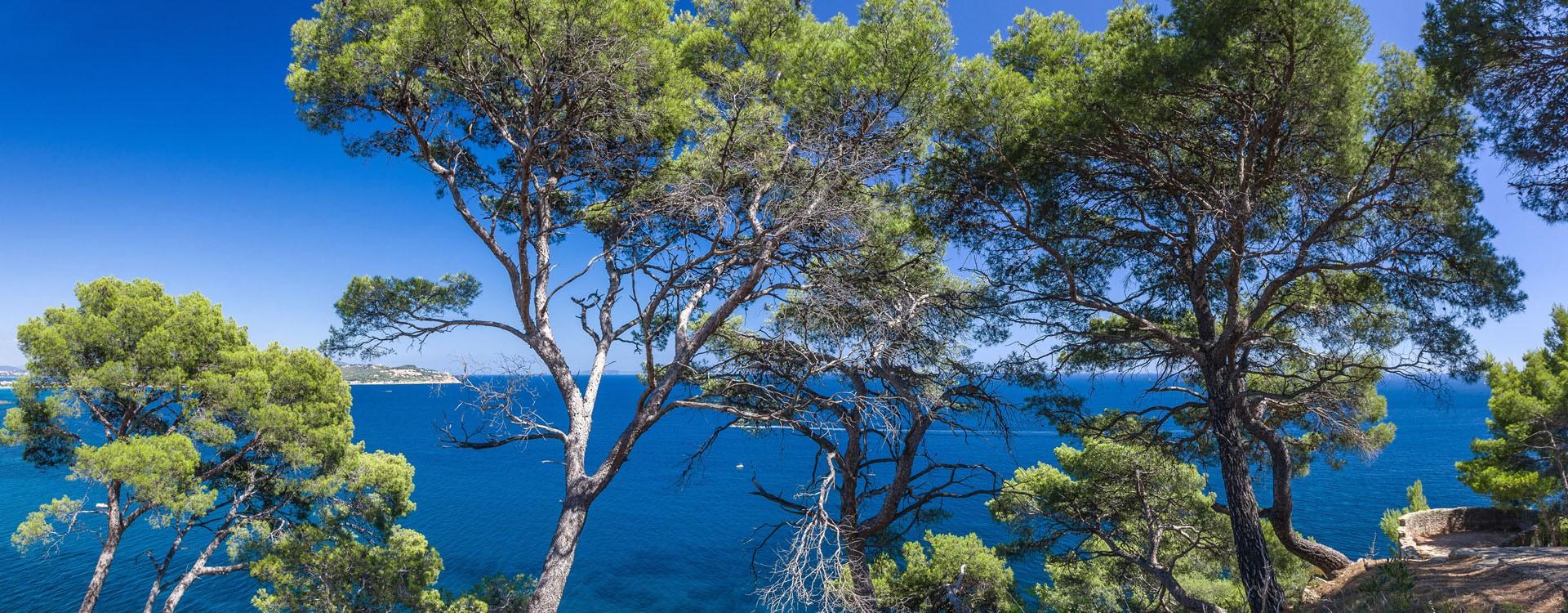 Shoreline trail - Cap Sicie forest