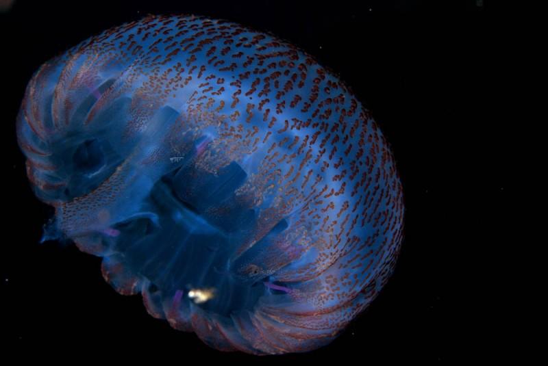 Méduse en Méditerranée