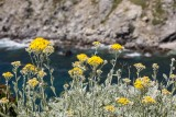 Flore des Embiez