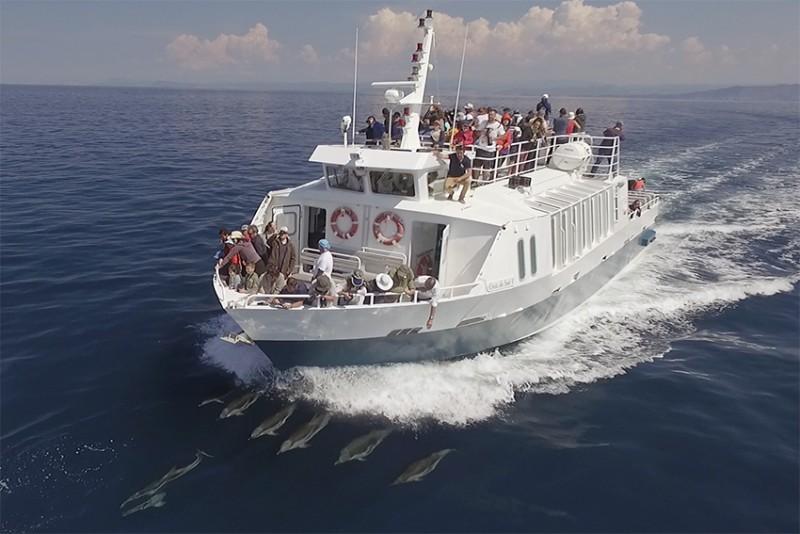 Sortie observation des cétacés avec La Croix du Sud Sanary baleine dauphins rorqual tortue