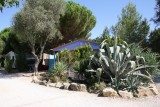 bungalow-cactus-21715