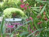 Jardin été