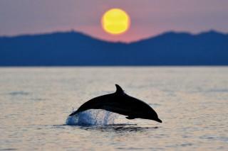 Sortie dauphins et coucher du soleil avec Découverte du Vivant Sanary